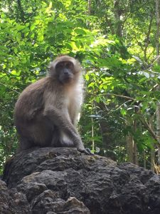 181116-Penarak-Langkawi-Hanuman-Paatham-2