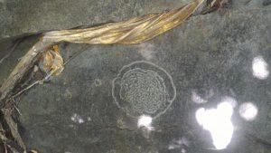 181116-Penarak-Langkawi-Hanuman-Paatham-5